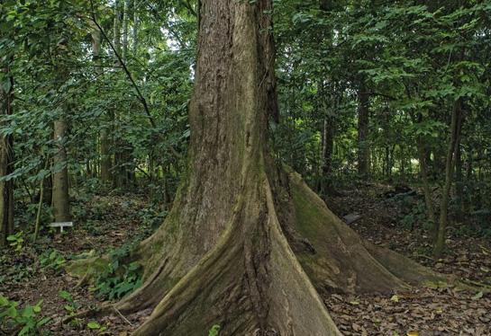 Botanical Garden at the University of Kisangani, DRC (Photo by Ollivier Girard/CIFOR)