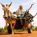 Woman transporting firewood, Burkina Faso (Photo by Ollivier Girard/CIFOR)